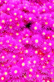 Pink Flower Background Royalty Free Stock Photo