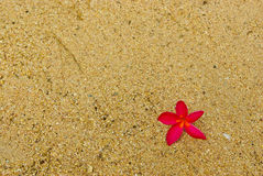 Pink flower  on the beach sand Stock Photos