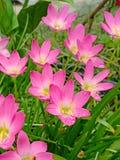 Pink flower. Beautiful stock photography