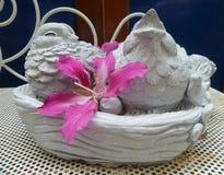 Pink flower in bird nest Stock Images