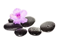 Pink flower and black stones. Spa concept. Stock Photos