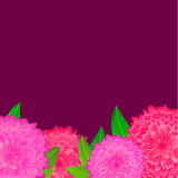 Pink flower with blank dark space Stock Images