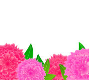 Pink flower with blank space Royalty Free Stock Image