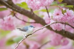 Pink, Flower, Bloom, Blossoms Stock Image
