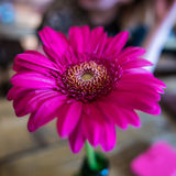 Pink flower. A pink flower in bloom on a table Royalty Free Stock Photo