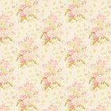 Pink, Flower, Blossom, Petal stock image