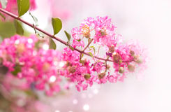 Pink flower blossom in summer, soft focus and blur Stock Images