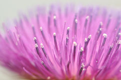 Pink flower blurry background Stock Images
