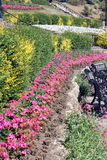 Pink flower border. In large landscaped park royalty free stock image
