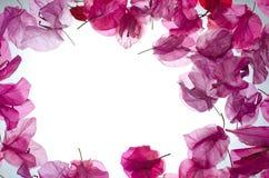 Pink flower border Stock Image