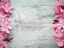 Pink flower border and frame on white wooden background. And wallpaper stock images