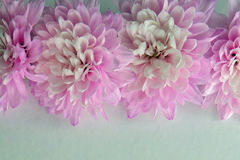 Pink Flower border on a White Background. With room for text royalty free stock photo