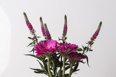 Pink flower bouquet isolated on a white background. Pink flower bouquet in bloom isolated on a white background stock image