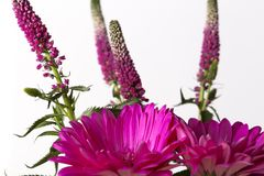 Pink flower bouquet on a white background. Close up still stock photos