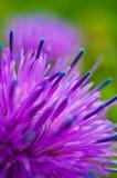 Pink flower Royalty Free Stock Image
