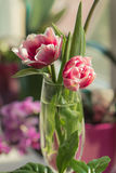 Pink flower. Bright pink tulip in a vase on the table Royalty Free Stock Image