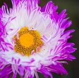 Pink flower bud Stock Photos