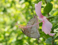 Pink flower with butterflies Stock Photo