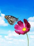 Pink flower with butterfly Royalty Free Stock Image