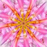 Pink Flower Center Collage Geometric Pattern Stock Photos
