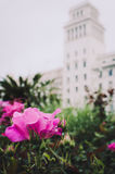 Pink flower on the city Stock Photo