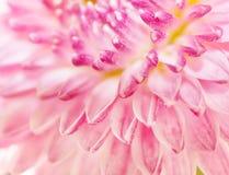 Pink flower close up Stock Photos