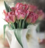 Pink flower closeup bokeh background. Pink flower closeup bouquet tulip blossom spring still life royalty free stock photos