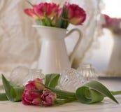 Pink flower closeup white vase bokeh background. Blossom still-life spring royalty free stock photos