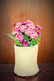 Pink flower in cloth pot Stock Images