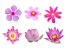 Pink flower collection Royalty Free Stock Image