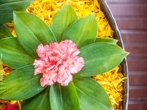 Flower decoration. Pink flower decorated on marigold petal Stock Image
