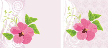Pink flower on the decorative background. Cards Royalty Free Stock Image