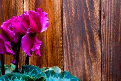 Pink flower with defocused natural wood background royalty free stock photo