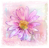 Pink flower. With dew drops Stock Image