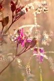 Pink flower in  dew Stock Photos