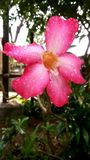 Pink Flower. Stock Photos
