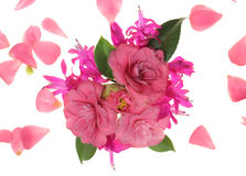 Pink flower explosion Stock Images