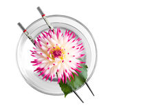 Pink flower floating in bowl Royalty Free Stock Images