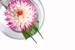 Pink flower floating on the Chinese sticks in bowl Stock Photo