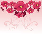 Pink flower. Floral background. Royalty Free Stock Image