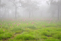 Pink flower, Fog in forest Stock Photography