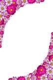 Pink flower frame Stock Images