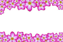 Pink flower frame Stock Photos