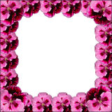 Pink flower frame Royalty Free Stock Image