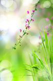 Pink flower and fresh grass with light reflect Stock Images