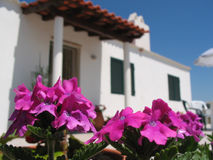 Pink flower in front of house. This is a close-up photo of pink flowers in front of a house Stock Photography