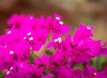 Pink flower with blurred background royalty free stock photography
