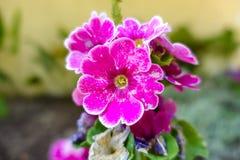 Pink Flower. In the garden on macro focus Stock Photo