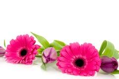Pink flower garland Stock Photos