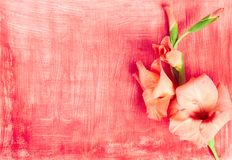 Pink flower gladiolus on red hand painted paper background. Gentle pink flower gladiolus on red paper background with white brush strokes, flat lay, top view royalty free stock image